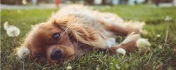Top Tips for Taking your Dog on a Lake District Holiday this Autumn