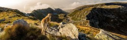 dog-friedly-pubs-and-restaurants-in-lake-district