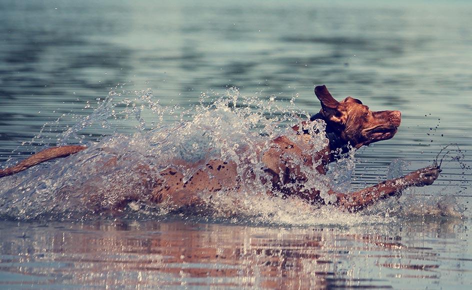 Best Dog Friendly Cottage Holidays Uk